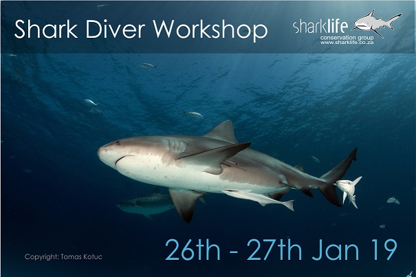 Shark Diver Workshop AD2