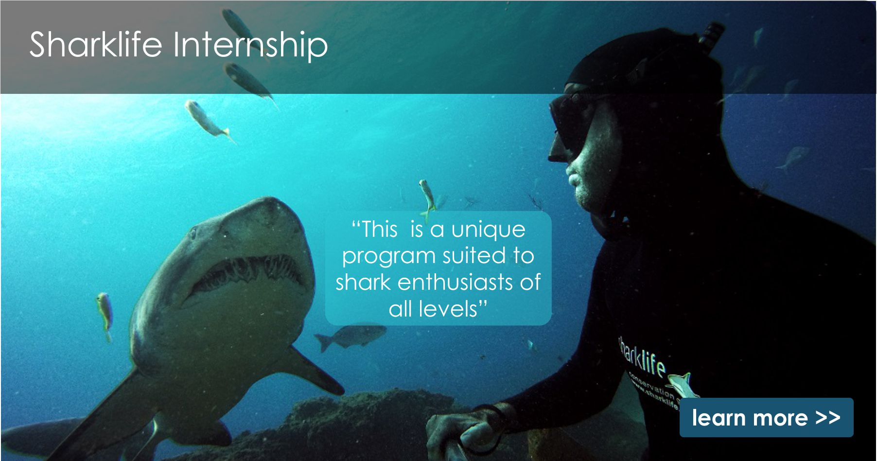 Sharklife intership2